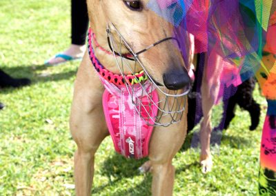 Pride-Fair-Day-Doggywood-Parade