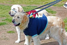Newcastle-Pride-Doggy-Parade-2